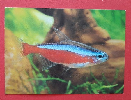 DDR Fischkarte