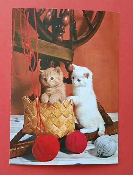Katzen Postkarte